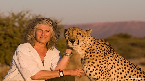 La donna che salva i ghepardi