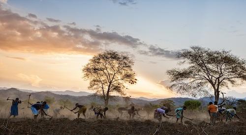 L'agricoltura malata del Malawi
