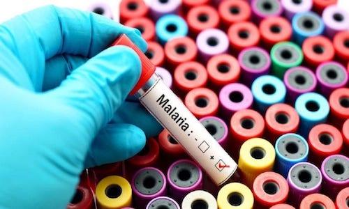 Malaria, il killer che uccide più del Covid-19