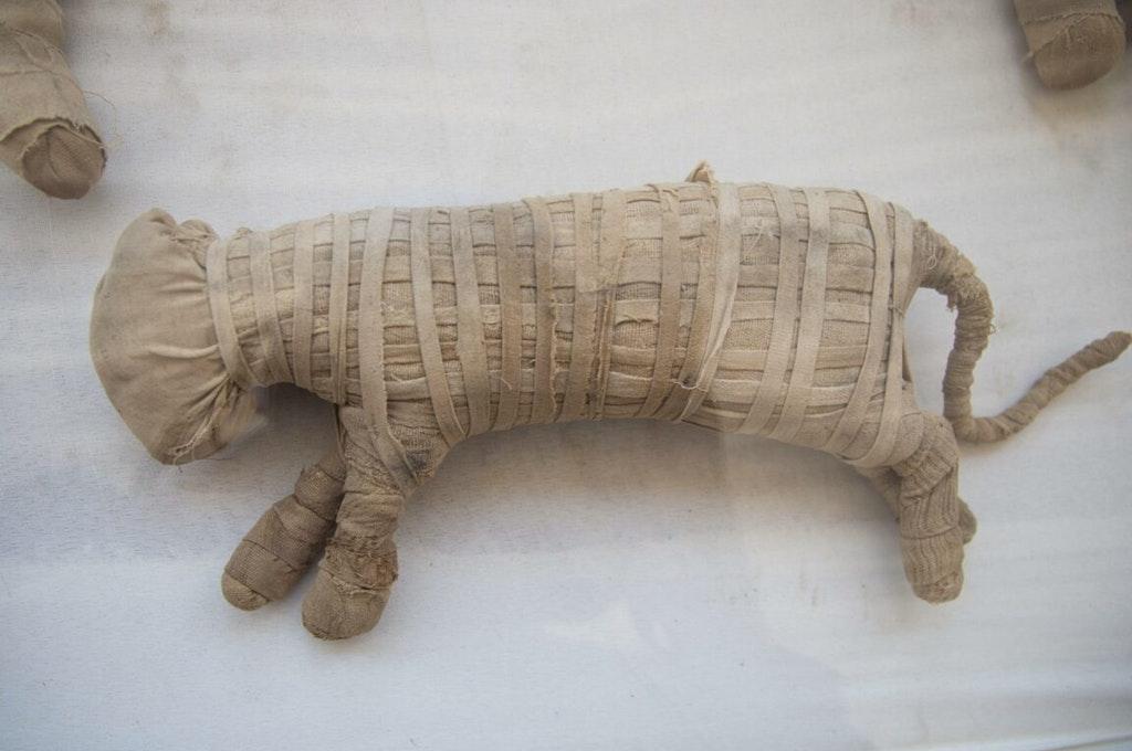 Egitto | Scoperte mummie di animali